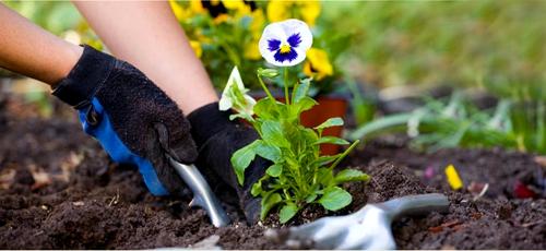 gardening-health-benefits