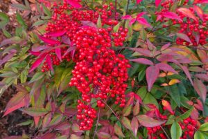 Plants For Fall And Winter Interest Floral And Hardy Of Skippack