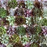 The Charm of Sleek and Savvy Succulents